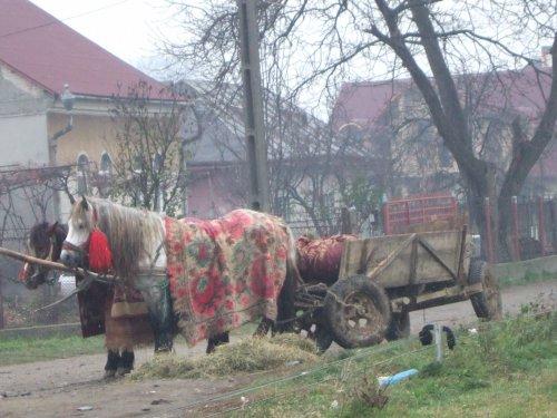 世界一周ルーマニア旅行