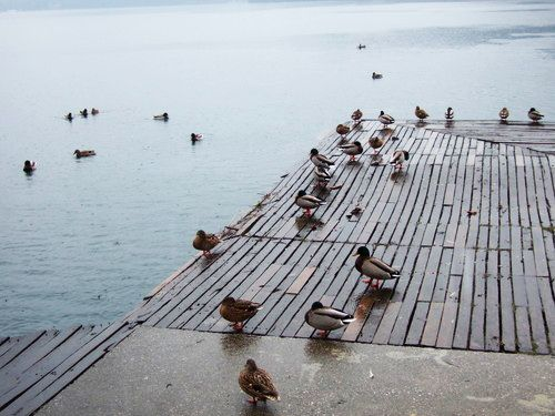 世界一周・ブレッド湖観光_28.jpg