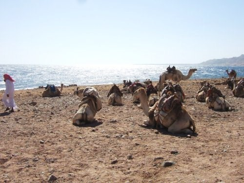 世界一周エジプト旅行24