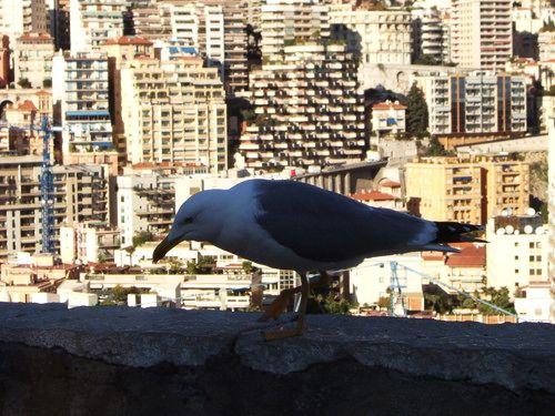 世界一周・モナコ観光_24.jpg