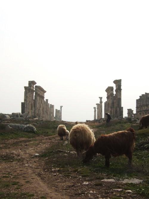 世界一周シリア旅行14