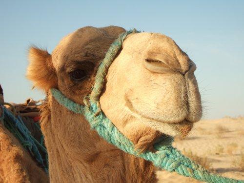 世界一周チュニジア旅行19