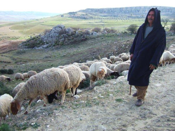 世界一周チュニジア旅行48