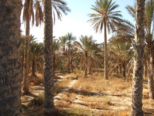 世界一周チュニジア旅行9