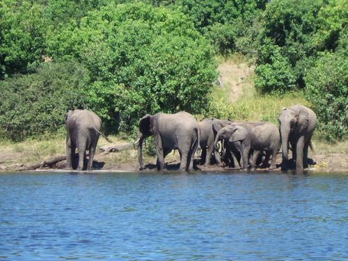 世界一周ボツワナ旅行11
