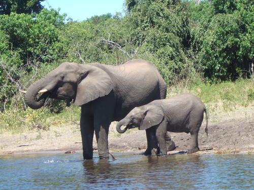 世界一周ボツワナ旅行13