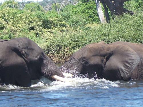 世界一周ボツワナ旅行20