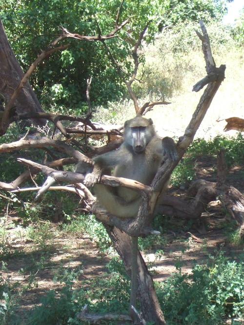 世界一周ボツワナ旅行6