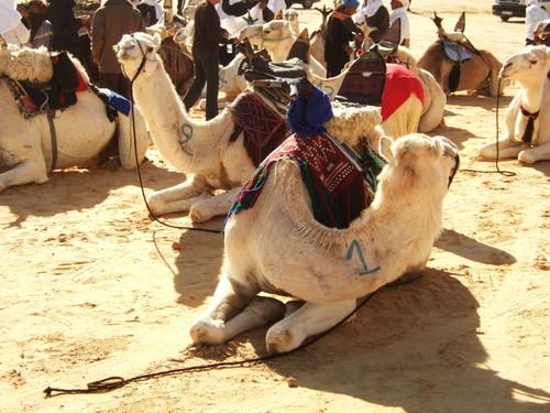 世界一周・サハラフェスティバル観光1_6.jpg