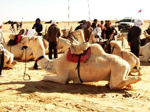 世界一周・サハラフェスティバル観光1_8.jpg