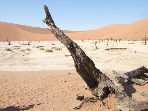 世界一周ナミビア旅行29