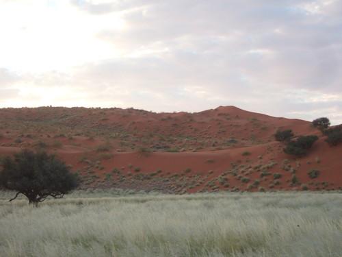 世界一周ナミビア旅行6