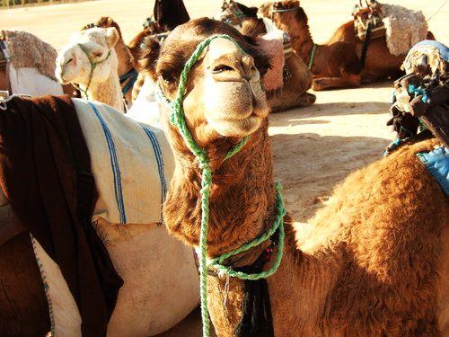 世界一周・サハラ砂漠ツアー1_1.jpg