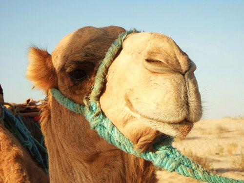 世界一周・サハラ砂漠ツアー1_13.jpg