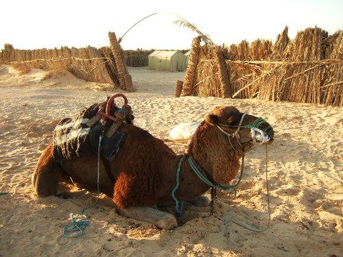 世界一周・サハラ砂漠ツアー1_15.jpg