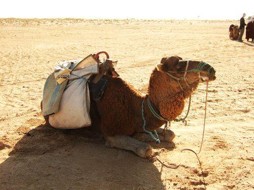 世界一周・サハラ砂漠ツアー1_2.jpg