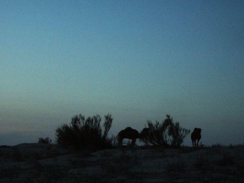世界一周・サハラ砂漠ツアー1_25.jpg