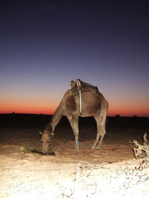 世界一周・サハラ砂漠ツアー1_29.jpg