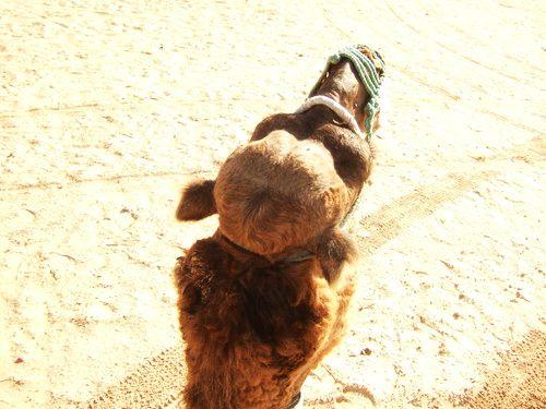 世界一周・サハラ砂漠ツアー1_3.jpg