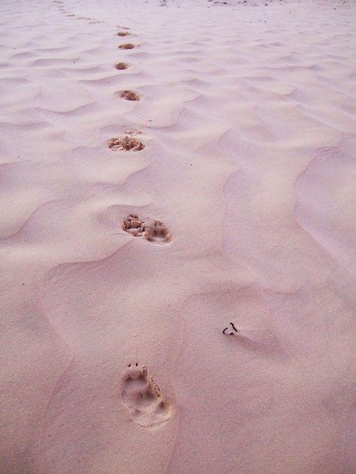 世界一周・サハラ砂漠ツアー1_33.jpg