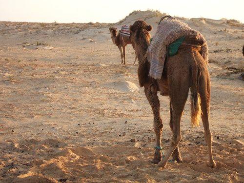 世界一周・サハラ砂漠ツアー1_43.jpg
