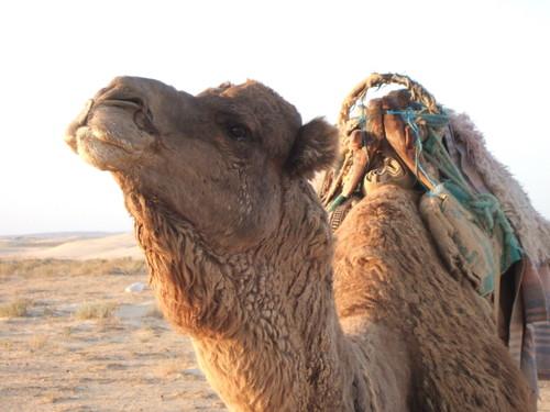 世界一周・サハラ砂漠ツアー1_44.jpg