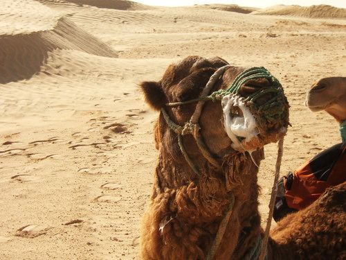 世界一周・サハラ砂漠ツアー1_45.jpg