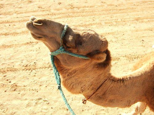 世界一周・サハラ砂漠ツアー1_5.jpg