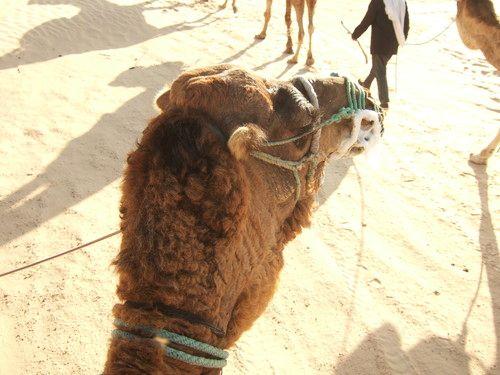 世界一周・サハラ砂漠ツアー1_6.jpg
