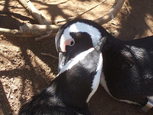 世界一周南アフリカ旅行12