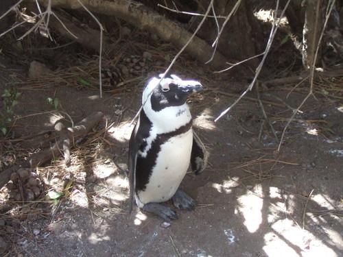 世界一周南アフリカ旅行13