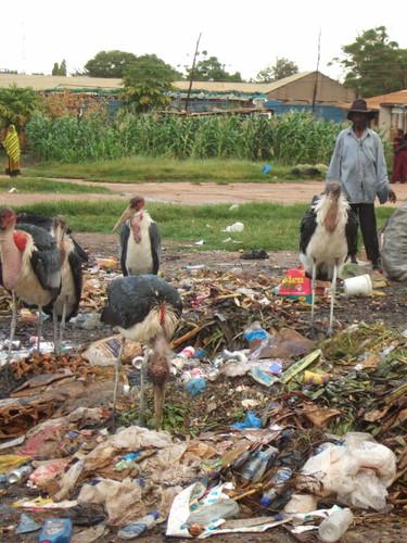 世界一周タンザニア旅行10