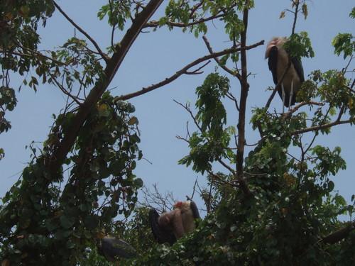 世界一周タンザニア旅行2