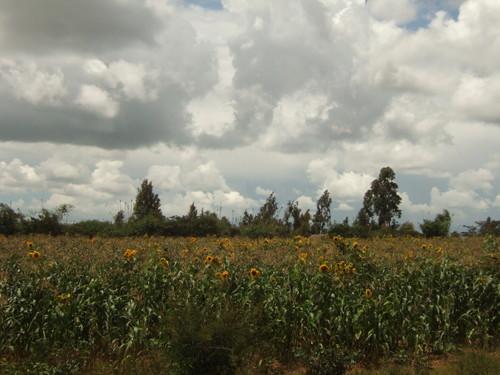 世界一周タンザニア旅行29