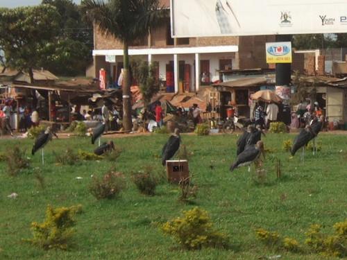 世界一周タンザニア旅行3