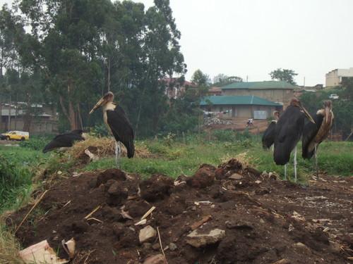 世界一周タンザニア旅行5