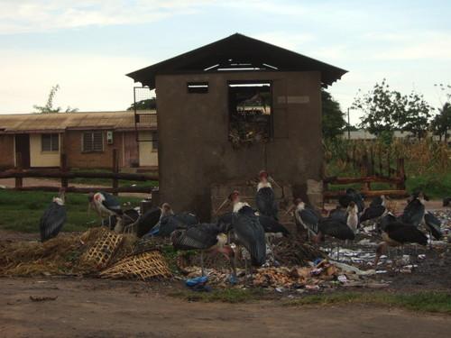 世界一周タンザニア旅行6
