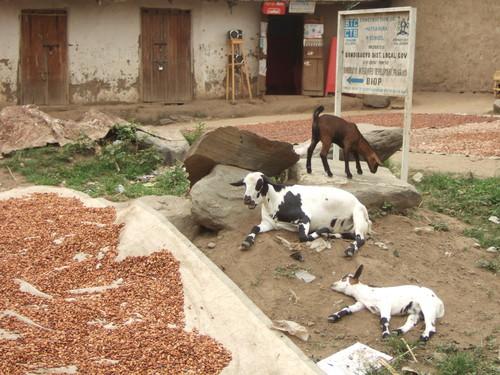 世界一周ウガンダ旅行24