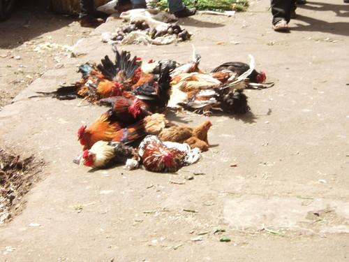 世界一周・エチオピア観光_17.jpg