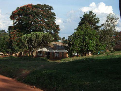 世界一周ルワンダ観光_2.jpg