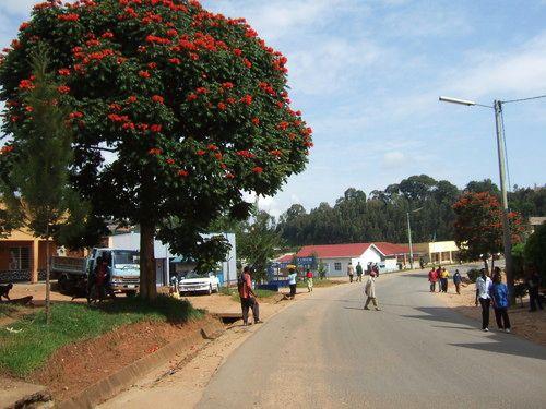 世界一周ルワンダ観光_28.jpg