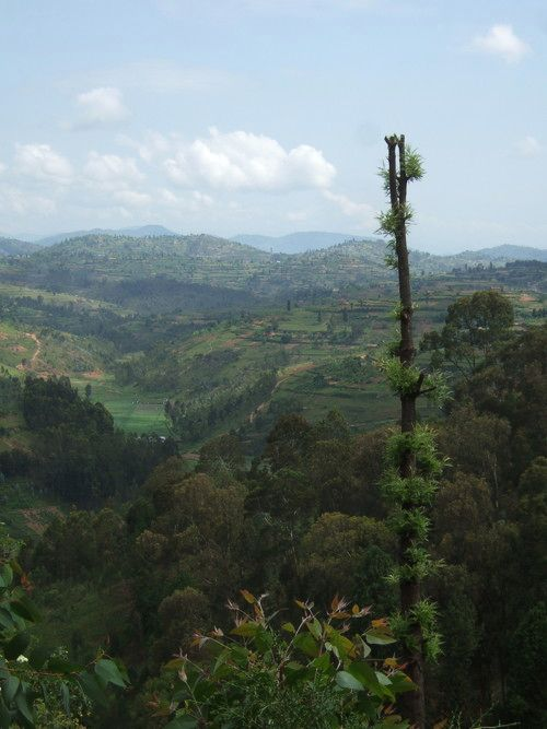 世界一周ルワンダ観光_31.jpg