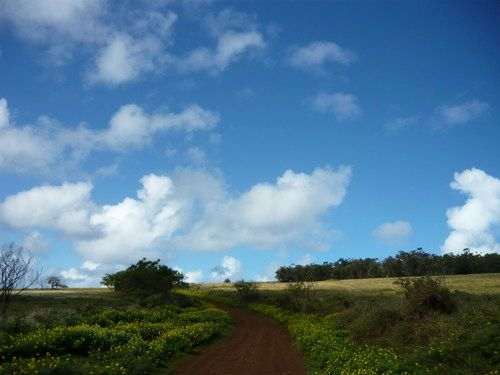 世界一周イースター島旅行29