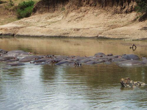 世界一周マサイマラ国立公園サファリ_14.jpg