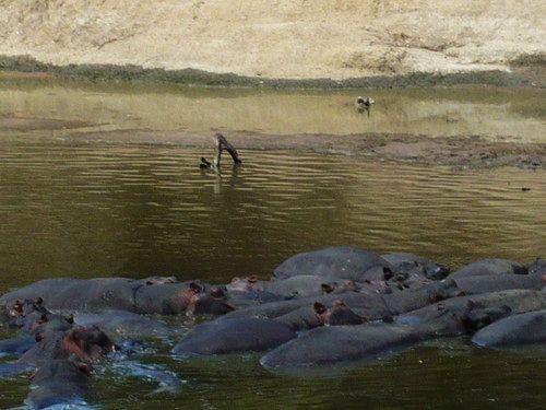 世界一周マサイマラ国立公園サファリ_16.jpg