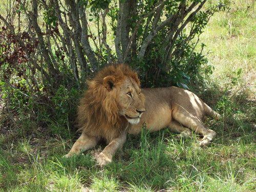 世界一周マサイマラ国立公園サファリ_19.jpg