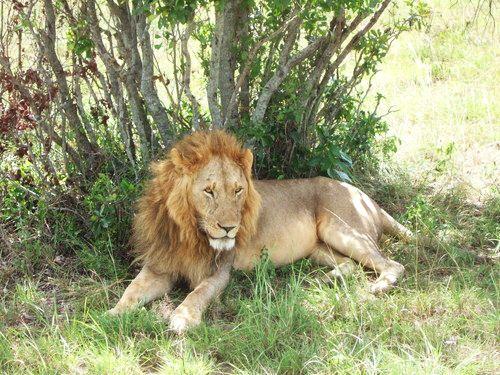 世界一周マサイマラ国立公園サファリ_20.jpg