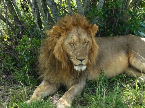 世界一周マサイマラ国立公園サファリ_21.jpg