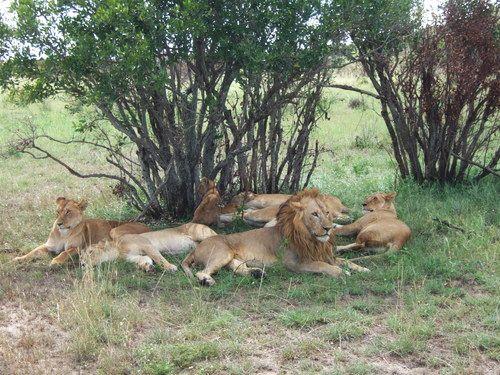 世界一周マサイマラ国立公園サファリ_22