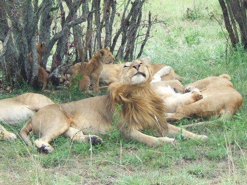 世界一周マサイマラ国立公園サファリ_23.jpg
